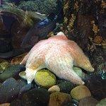 Kodiak Laboratory Aquarium & Touch Tank Photo