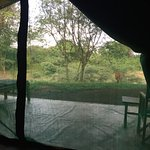 View from our tent, see a deer grazing outside