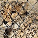 Foto de Animal Ark