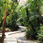 Walk path to the uphill gazebo