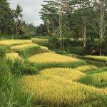 Bild från Bali Hai Bike Tours