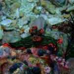 Foto de Evolution Diving