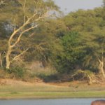 Central African Wilderness Safaris Mvuu Lodge Photo