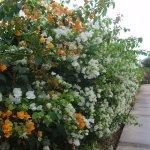 Gardenia Plaza Resort Photo