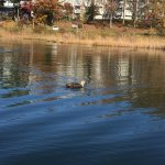 Photo de Megami Lake