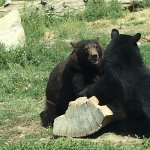 Great place to see bears and other wildlife!!