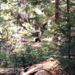 We saw a black bear!