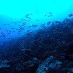 plongée poissoneuse proche de la passe Tikehau
