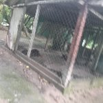 Maltrato animal, atrás del hotel tienen dos perros claramente enfermos, encerrados en jaulas ena