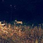 Deer each night on campus