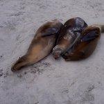 Foto de Puerto Chino Beach
