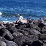 Foto de Punta Carola