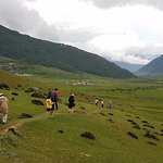 Our tourists taking walk through Gangtey Nature Trail