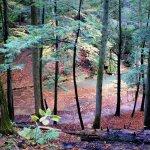 Photo de Comfort in the Woods Cabins