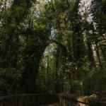 Photo of Parco Urbano dei Camaldoli