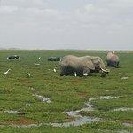 Foto van Amboseli Serena Safari Lodge