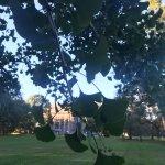 Vanderbilt estate