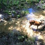 Deer Enclosure