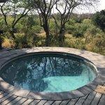 Foto di Londolozi Private Game Reserve