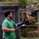 Taylor, a naturalist with RRANC, works with Thor, an injured hawk.