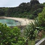 Photo of Tiritiri Matangi Island