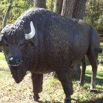 Buffalo at the entrance