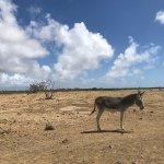 Photo of Donkey Sanctuary Bonaire