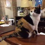 Hotel cat!