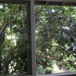 Feels like living in a treehouse
