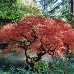 Photo de Kubota Garden