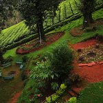 The hotel garden and adjoining tea estate.