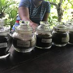 Luwak Civet Coffee Farm