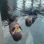Photo de Seattle Aquarium