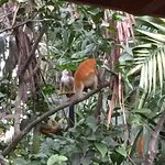 The monkeys that greeted us on arrival