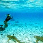 swim with sharks and stingrays