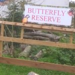 The butterfly reserve easily accessible by young children full of old tree cuttings and other ru