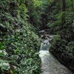 River View - Curi-Cancha Reserve, Monteverde, Costa Rica.