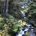 Quinault Rain Forest resmi
