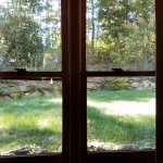 Room window looking onto the backyard.