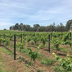 Photo of Hunter Valley Wine Tasting Tours