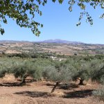 Surrounded by olive groves...