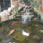 Koi Fish Pond, Jim Gray's Petrified Wood Co, Holboork, Arizona