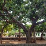 ภาพถ่ายของ Sri Ramana Ashram