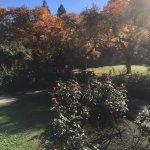 Part of Ross garden