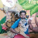 Feeding Tiger Cub