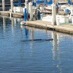 Photo de Monterey Bay