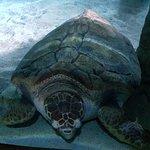 Tartaruga no aquário