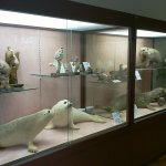Aikappu Natural History Museum foto
