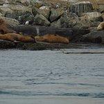 Big seals post eating