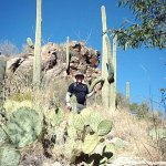 HIrking the phone line trail amidst the saguaro cacti .. bring plenty of water and sunscreen!